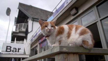 CWC19 WU9: WI v NZ – Our Purr-fect spectator!
