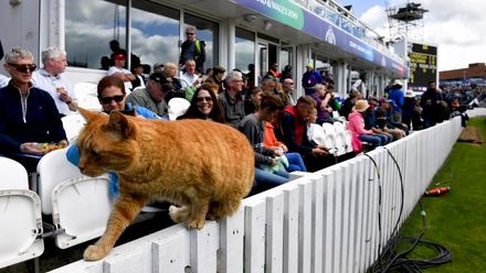 CWC19: AFG v NZ - Meet Somerset member Brian the Cat