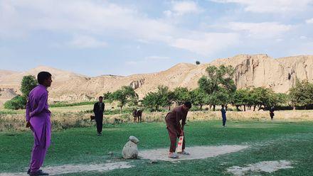 When cow corner means COW corner. Location: Afghanistan. Photo credit: Noorullah Khan